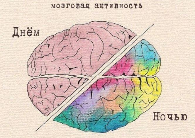 Парадоксальность быстрой фазы состоит в том, что в период наибольшего расслабления тела активность головного мозга находится на пике, как будто человек бодрствует.