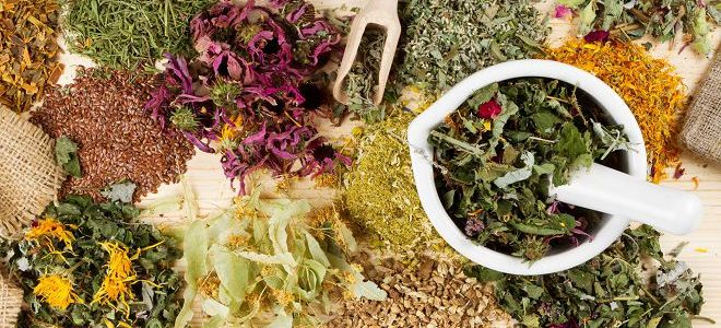Травяные отвары во все времена использовались для борьбы с различными болезнями. Если начала появляться бессонница, справиться с ней помогут растения со снотворным действием, успокаивающие нервную систему.