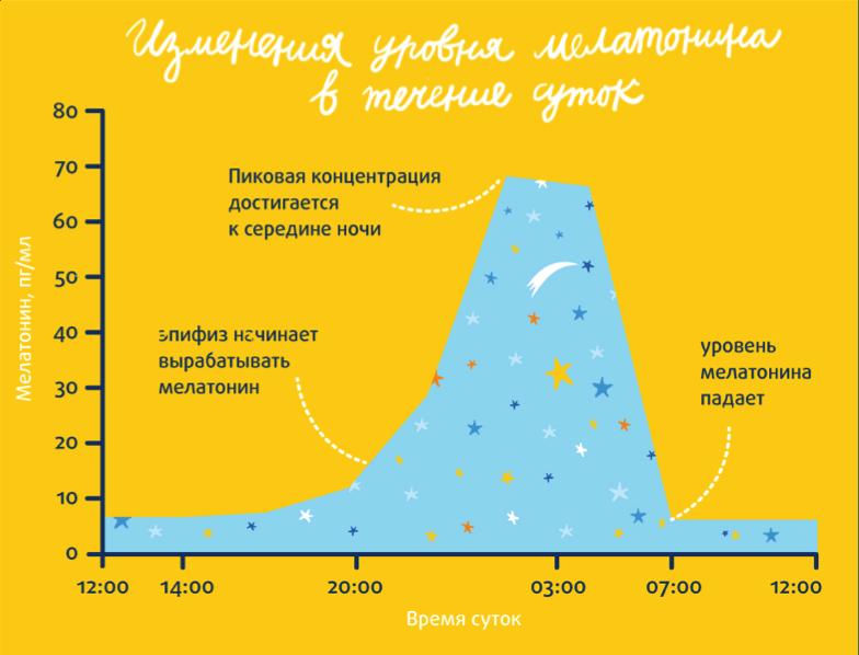 О том, когда вырабатывается мелатонин у человека, сегодня известно все. Шишковидной железой он начинает активно вырабатываться после 21 часа, когда темнеет.